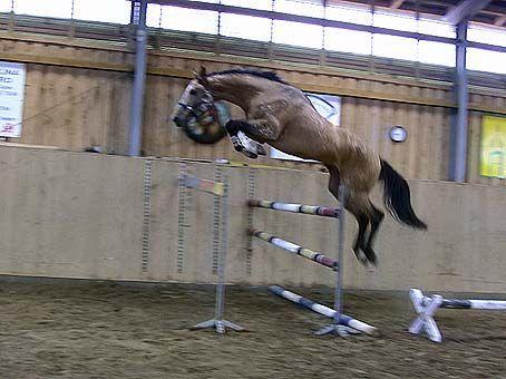 Recherche personne pour faire un portrait de ce cheval ! Lzcwlmh3